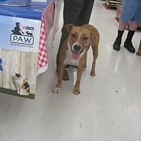 Hound (Unknown Type)/Labrador Retriever Mix Dog for adoption in Chatham, Virginia - Peaches