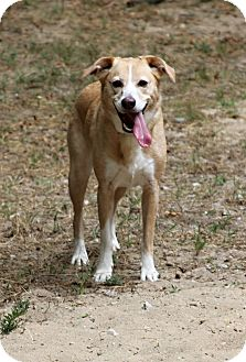 Collie Mix Dog for adoption in Muskegon, Michigan - Baylie