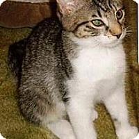 Adopt A Pet :: Kirsten - Kirkwood, DE