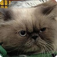 Adopt A Pet :: Blue - Beverly Hills, CA
