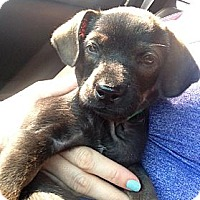 Adopt A Pet :: Milk Dud - Inglewood, CA