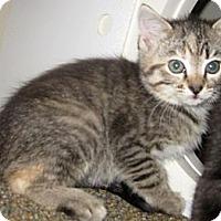 Adopt A Pet :: Sprite - Dallas, TX