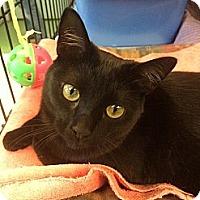 Adopt A Pet :: Jovanne - New York, NY