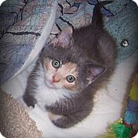 Adopt A Pet :: Cuddles - ADOPTION PENDING - South Plainfield, NJ