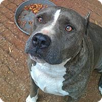 Adopt A Pet :: Justice - Blanchard, OK