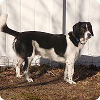 Adopt A Pet :: BB -PENDING ADOPTION - Braintree, MA