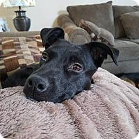 Adopt A Pet :: Zena - Meridian, ID