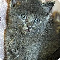 Adopt A Pet :: Oliver-Adoption Pending - Fort Leavenworth, KS
