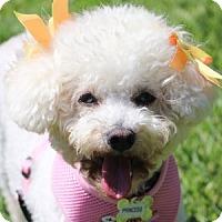 Adopt A Pet :: Princess - La Costa, CA