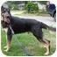 Photo 2 - German Shepherd Dog Dog for adoption in Pike Road, Alabama - Marx
