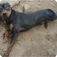 Adopt A Pet :: Sparky - Fowler, CA