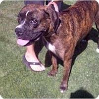 Adopt A Pet :: Abbey - Scottsdale, AZ