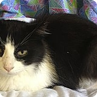 Adopt A Pet :: Lacey - Hyde Park, NY