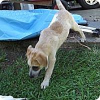 Adopt A Pet :: Mae - Danbury, CT