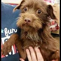 Adopt A Pet :: Opie - Fresno, CA