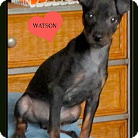 Adopt A Pet :: Watson - Hixson, TN