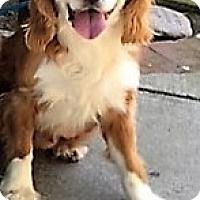 Adopt A Pet :: Barney-ADOPTED!! - Sacramento, CA