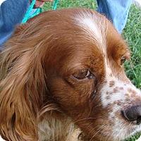 Adopt A Pet :: Heath - Erwin, TN