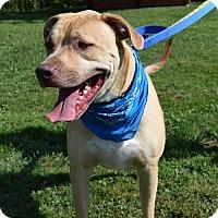 Adopt A Pet :: Dexter - Canastota, NY