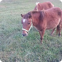 Adopt A Pet :: Coconut and Foal - Loudon, TN