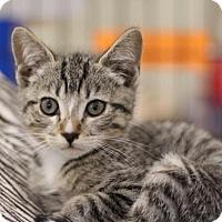 Adopt A Pet :: Sal - Sacramento, CA