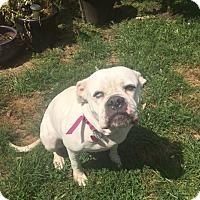Adopt A Pet :: Mavi - Newtown, PA