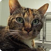 Adopt A Pet :: Fern - Grants Pass, OR