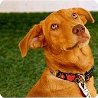Adopt A Pet :: Paisley - Mission Viejo, CA