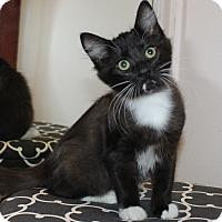 Adopt A Pet :: Jessie - Irvine, CA