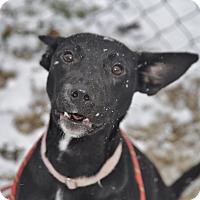 Adopt A Pet :: Raven - Meridian, ID
