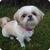 Adopt A Pet :: Jade - Drumbo, ON