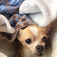 Adopt A Pet :: Buster Brownn - Ardmore, OK