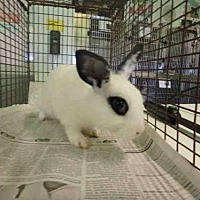 Adopt A Pet :: A1652597 - Los Angeles, CA