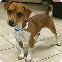 Adopt A Pet :: Stimpy - Phoenix, AZ