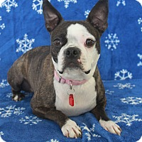 Adopt A Pet :: Suzie Q - Wichita, KS