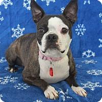 Adopt A Pet :: Suzie Q - Wichita, KS