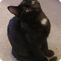 Adopt A Pet :: Annie Oakley - Covington, KY