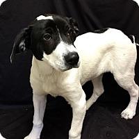 Adopt A Pet :: Duck - Nicholasville, KY