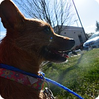 Adopt A Pet :: Downtown Julie Brown - Meridian, ID