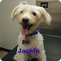 Adopt A Pet :: Jackie - Houston, TX
