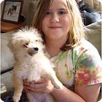 Adopt A Pet :: PUPPY...Vana - Leesport, PA