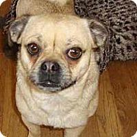 Adopt A Pet :: Sophia - Leesport, PA