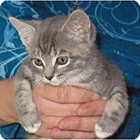 Adopt A Pet :: CurlyPoo - Port Republic, MD
