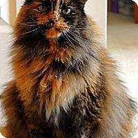 Adopt A Pet :: Cupcake - Alexandria, VA