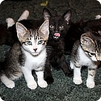 Adopt A Pet :: Bella - Nolensville, TN