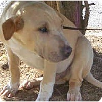 Adopt A Pet :: Michaelangelo - Scottsdale, AZ