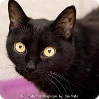 Adopt A Pet :: Charlie - Fountain Hills, AZ