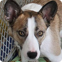 Adopt A Pet :: Cheyenne - North Olmsted, OH