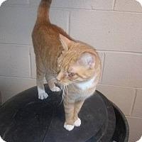 Adopt A Pet :: Sassy - Columbia, KY
