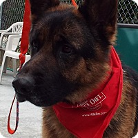 Adopt A Pet :: Kano - Grants Pass, OR